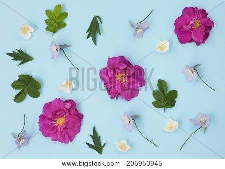 Floral pattern made of delphinium wild rose green leaves jasmine on white background. Flat lay top view. Valentine's background. Floral pattern. Flowers pattern texture.