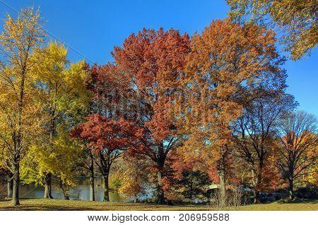 Central Park in autumn New York City USA