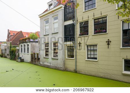 NETHERLANDS - DELFT - 2017 JULY 26: Canal houses in Delft with duckweed in the canal in the Netherlands.