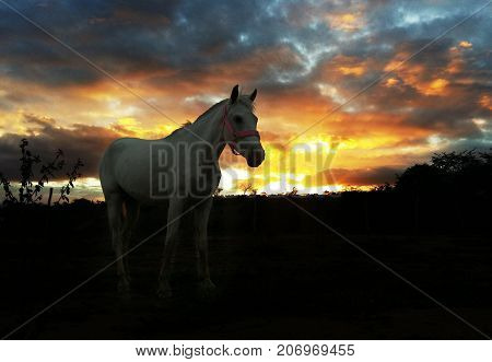 Princess, it is a beautiful mare in a farm!