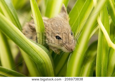 mouse in the grass . In the park in nature