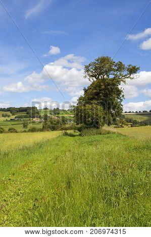 Oak Tree And Scenery