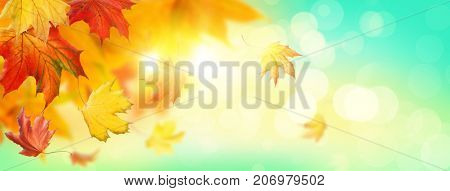 Abstract autumn background with falling leaves