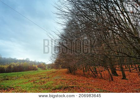 Cloudy Mountain Autumn Landscape With Colorful Forest.