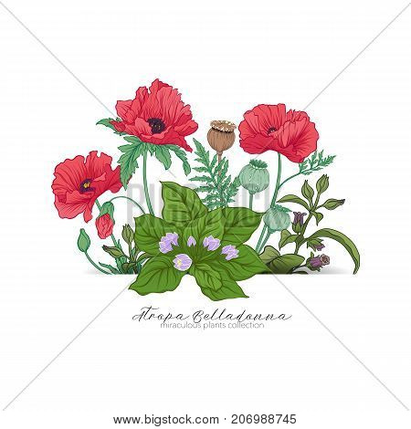 Opium poppy, belladonna and mandragora. Set of miraculous plants in botanical style. Stock line vector illustration.