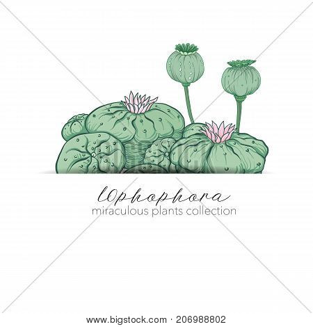 Opium poppy and ophophora. Set of miraculous plants in botanical style. Stock line vector illustration.