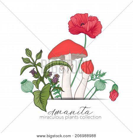 Opium poppy, belladonna and amanita mushroom. Set of miraculous plants in botanical style. Stock line vector illustration.