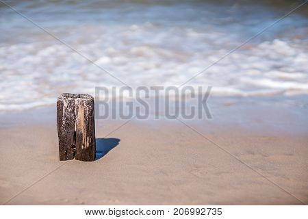 Single old wooden breakwater pole on the Baltic coast beach