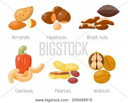 Piles of different nuts hazelnut almond peanut walnut cashew and tasty seed vector illustration. Organic collection nutshell group assortment vegetarian nutrition.