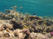Underwater scenery with coral reef and clear blue water poster