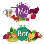 """Infographics """"Health food"""". Foods rich in microelements of molybdenum and boron. Illustration from the series """"Healthy lifestyle."""" Organic food poster"""