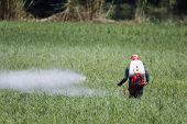 Farmer spraying pesticide on rice field . poster