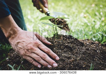 Planting A Tree, Two Hands Of Young Man Were Planting The Seedlings And Tree Growing Into Soil While