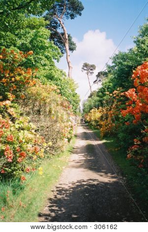 Pathway Along Flowers