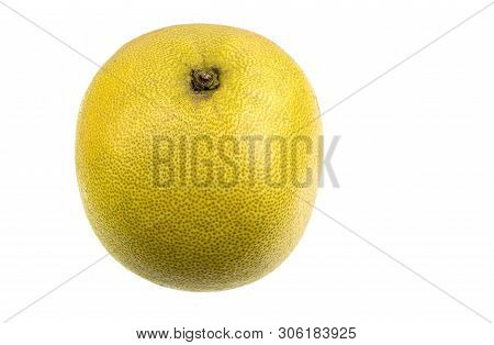 The pomelo fruit, Citrus maxima, is the largest citrus (15-25cm in diameter) fruit of the Rutaceae family, typically from pale green to yellow and sweet white flesh, native of Southeast Asia. poster