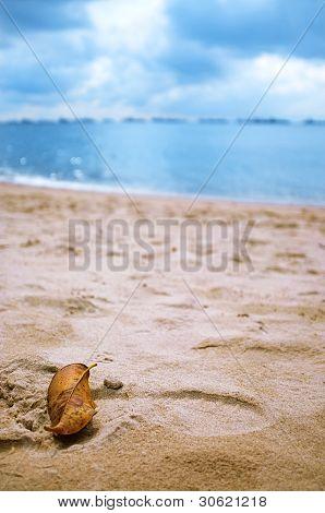 Leaf At The Beach