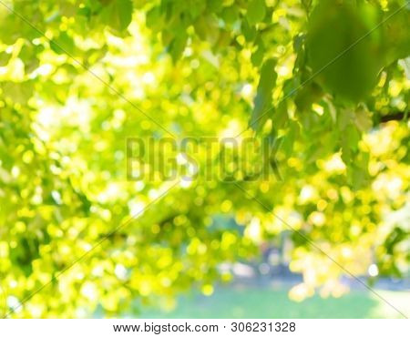 Green Leaves And Sunlight Background, Summer Sun Lights On A Green Branches, Greenery Background In