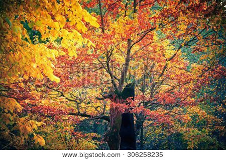 Bright trees in the autumn forest