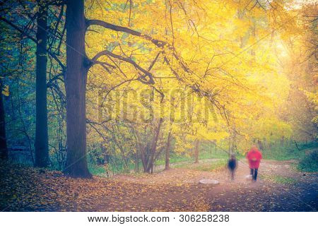 Walking in the foggy autumn forest