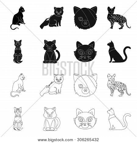 Vector Design Of Pet And Sphynx Sign. Set Of Pet And Fun Stock Symbol For Web.