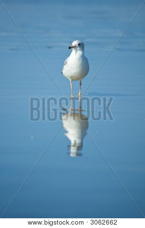 Gull On The Beach