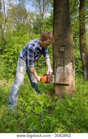 Cutting Dead Tree