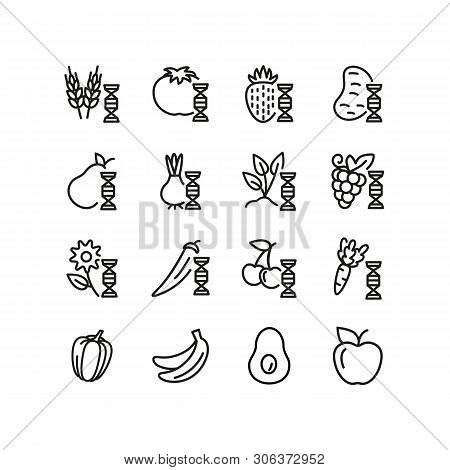 Modified Food Line Icon Set. Genetically Modified Fruit, Vegetables, Wheat. Food Concept. Can Be Use