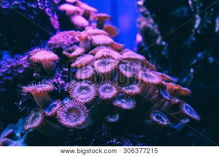 Pink Coral Reef. An Underwater Landscape With Colorful Reef In The Coral Sea.branch Coral. Great Bar