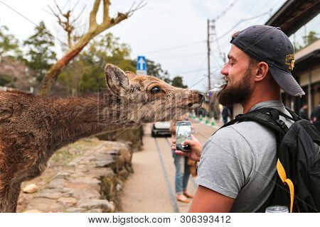 Japan, Nara, March, 25, 2017 - A Young Man Feeds A Deer In The City Of Nara And Shoots It All On The