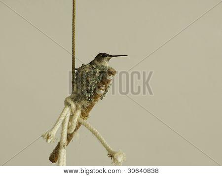 Momma Hummingbird