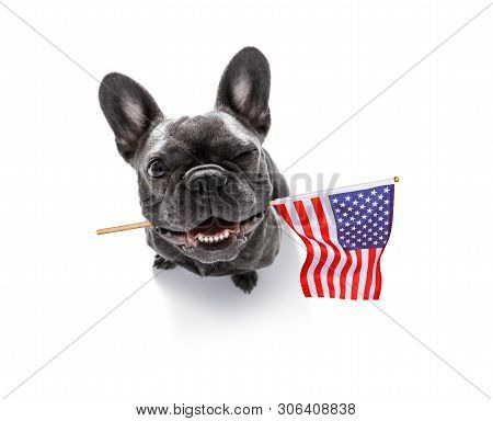 French Bulldog Waving A Flag Of Usa And Victory Or Peace Fingers On Independence Day 4th Of July Wit