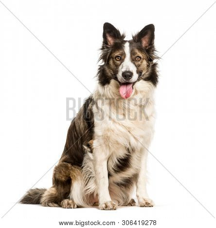 Mixed breed dog sitting against white background