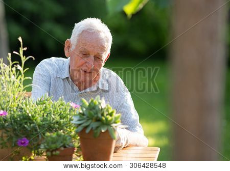 Senior Man Taking Care Of Plants In Flower Pots At Table In Garden