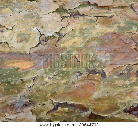 Peeling Bark Detail