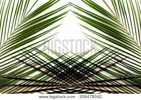 Flat Lay Of Palm Leaf Pattern Border With A White Background