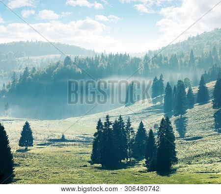 Coniferous Forest On Hills And Meadows. Foggy Afternoon In Mountains. Bright Nature Scenery With Clo