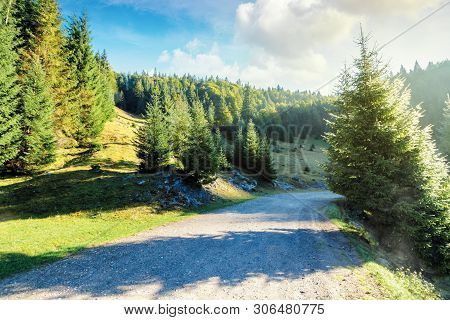 Old Country Road Through Forest At Sunrise.  Nature Scenery With Trees Along The Way. Sunny Autumn L