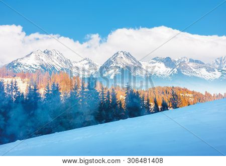 Winter Scenery In Mountains. Spruce Trees On A Snowy Hill In Evening Light. Snow Capped Ridge In The