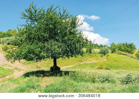 Orchard On The Hillside. Carpathian Rural Scenery In Summer
