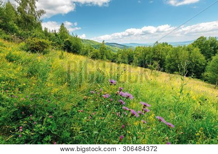 Grassy Forest Glade On The Hill In Summer. Wild Flowers And Herbs Among The Tall Grass.  High Decidu