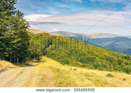 Old Country Road Through Hills In To The Primeval Beech Forest. Nature Scenery With Trees Along The