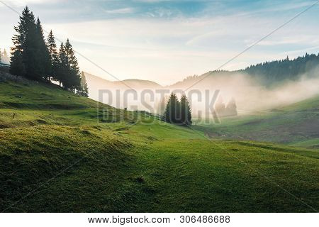 Foggy Dawn In Romania Countryside. Spruce Trees On Hills Of The Balileasa Valley. Shepherd Shed And