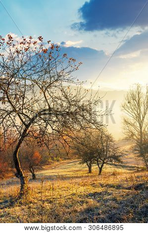 Apple Orchard On The Hillside In Autumn. Wonderful Countryside Background With Sunlight Coming Throu