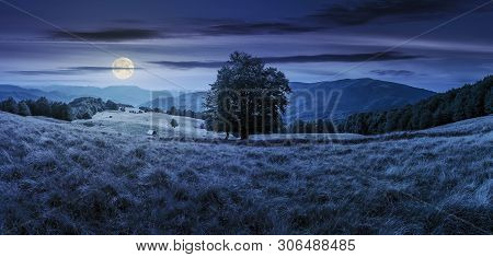 Beech Tree On The Meadow In Mountains At Night In Full Moon Light.  Forest Around The Slope. Wonderf