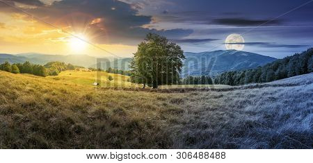 Day And Night Time Change Concept Above The Beech Tree On The Meadow In Mountains. Landscape With Su
