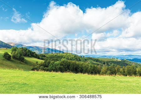 Forest On The Edge Of A Meadow In Mountains. Beautiful Scenery Of Carpathian Borzhava Ridge In Early