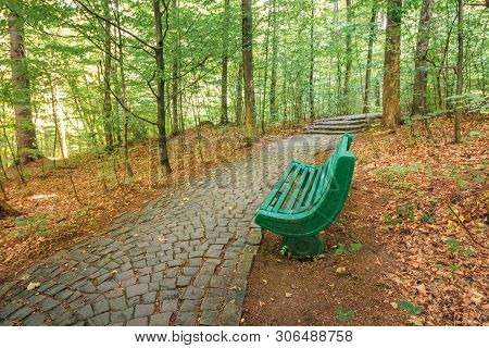 Bench Near The Stone Path In Forest. Beautiful Nature Scenery. Green Foliage On Trees In Summer Time