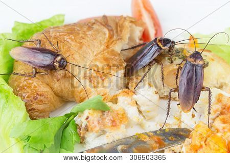 The Problem In The House Because Of Cockroaches Living In The Kitchen. Cockroach Eating Whole Wheat