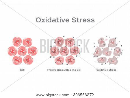 Oxidative Stress Cell Vector / Free Radical On White