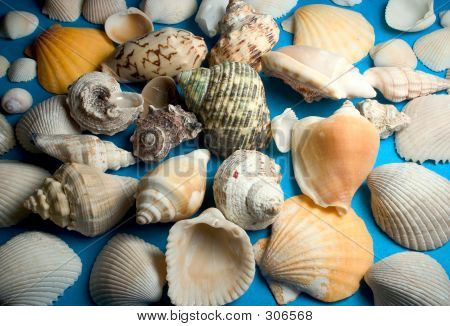 assorted seashells on blue background poster